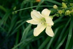 Mooie gele bloemclose-up op groene distelsachtergrond stock foto's