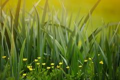 Mooie gele bloemen Stock Foto