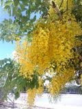 Mooie gele bloemen Royalty-vrije Stock Foto's