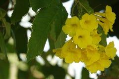 Mooie gele bloemen Royalty-vrije Stock Afbeeldingen