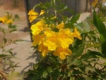 Mooie gele bloemen Royalty-vrije Stock Afbeelding