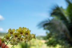 Mooie gele bloemen in de tuin royalty-vrije stock fotografie