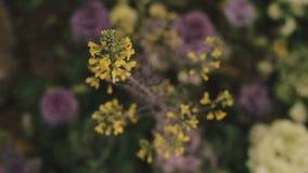 Mooie gele bloemen in een park stock videobeelden