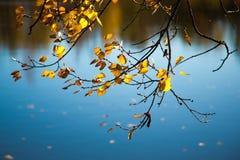 Mooie gele de Herfstbladeren Stock Foto