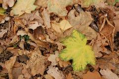 Mooie gele en bruine bladeren die op de grond in de herfsttijd liggen stock foto's