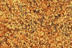 Mooie gele en oranje de bladerenachtergrond van de de herfstdaling kleur royalty-vrije stock foto's