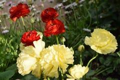 Mooie gele en rode bloemen Stock Foto