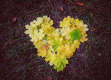 Mooie gele esdoornbladeren Liefde nave royalty-vrije stock afbeeldingen