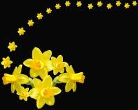 Mooie gele narcissen zwarte achtergrond stock illustratie