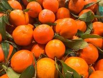 Mooie gele natuurlijke zoete smakelijke rijpe zachte ronde heldere heldere mandarijnen, vruchten, clementines Textuur, achtergron royalty-vrije stock fotografie