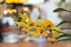 Mooie gele orchidee Stock Afbeelding