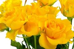 Mooie gele rozen Stock Afbeelding