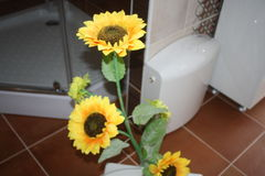 Mooie gele Zonnebloemen Stock Afbeeldingen