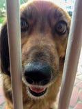 Mooie gelukkige bruine hond stock foto's