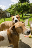 Mooie gelukkige honden stock foto