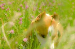 Mooie gelukkige honden royalty-vrije stock afbeeldingen