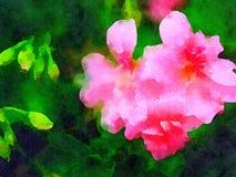 Mooie Geraniumbloem in Waterverf Stock Afbeeldingen