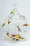 Mooie gesneden kooi met vogels Stock Foto