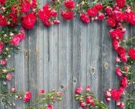Mooie gestileerde tuin rode rozen op doorstane houten retro textur Stock Foto