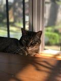 Mooie Gestreepte kat bij schemer royalty-vrije stock afbeeldingen