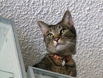 Mooie gestreepte kat van onderaan Royalty-vrije Stock Foto's