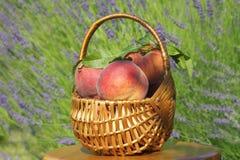 Mooie geurige perziken in mand Royalty-vrije Stock Foto