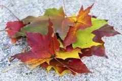 Mooie gevallen de herfstbladeren Royalty-vrije Stock Foto's