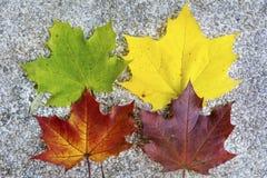 Mooie gevallen de herfstbladeren Stock Foto's