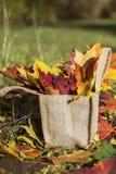 Mooie gevallen de herfstbladeren in canvaszak Stock Afbeeldingen
