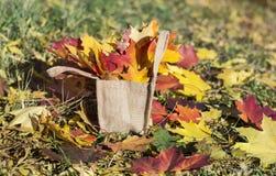 Mooie gevallen de herfstbladeren in canvaszak Stock Foto's