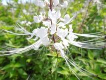 Mooie gevoelige witte bloem Royalty-vrije Stock Afbeeldingen