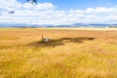 Mooie gezonde paddock met watertrog Stock Foto's