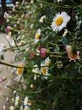 Mooie glanzende bloemen in omheining stock foto's