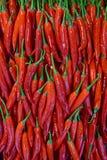 Mooie glanzende rode cayennepeper Stock Afbeeldingen