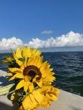 Mooie glanzende zonnebloem stock foto