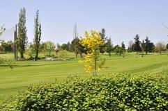 Mooie golfcursus Stock Foto