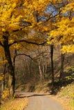 Mooie gouden boom in het Italiaans de herfst stock afbeeldingen