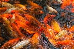 Mooie gouden Koi-vissen Royalty-vrije Stock Foto
