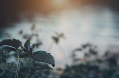 Mooie Goudsbloemen in de tuin stock afbeeldingen