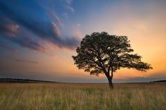 Mooie graslandzonsondergang met boom en heldere kleurenwolken stock foto's