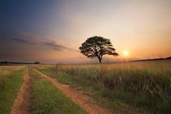 Mooie graslandzonsondergang met landweg voorbij boom en heldere colou royalty-vrije stock foto