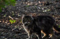 Mooie grijze kat die ter plaatse lopen Gray Cat Huisdier openlucht stock fotografie