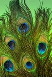 Mooie groene achtergrond van pauwveren stock fotografie