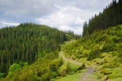Mooie groene berg Royalty-vrije Stock Afbeelding
