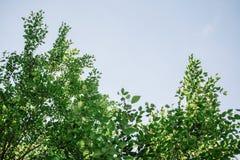 Mooie groene bladeren tegen hemelachtergrond royalty-vrije stock afbeeldingen
