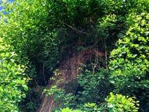 Mooie groene bladeren van boom in Israël Sluit omhoog geschoten Royalty-vrije Stock Afbeelding