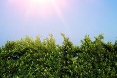 Mooie groene bladerenachtergrond Stock Foto's