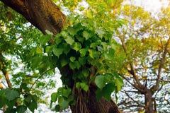 Mooie groene bladerenachtergrond Royalty-vrije Stock Afbeeldingen