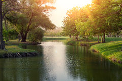 Mooie groene bladerenachtergrond Royalty-vrije Stock Afbeelding