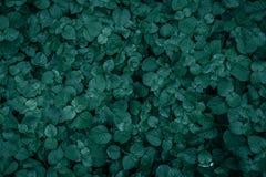 Mooie groene bladerenachtergrond Royalty-vrije Stock Fotografie